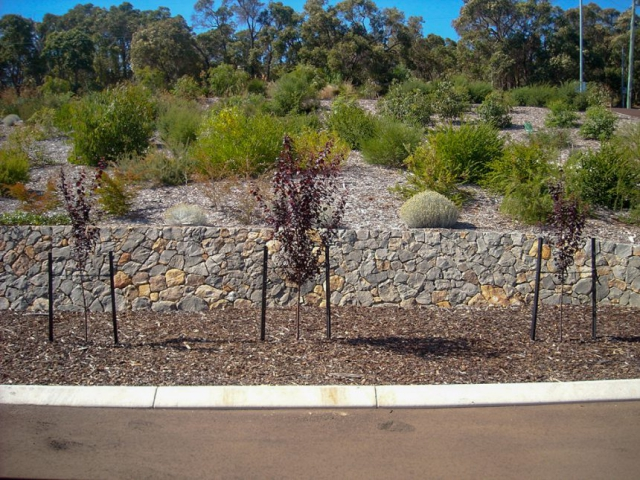 Geographe Landscaping, Native Landscapes Gallery