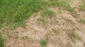 Geographe Landscapes Brown spots on turf