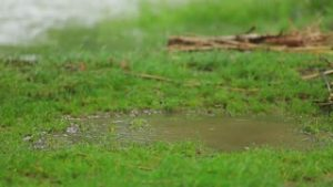 Geographe Landscapes - Muddy grass - reticulation maintenance