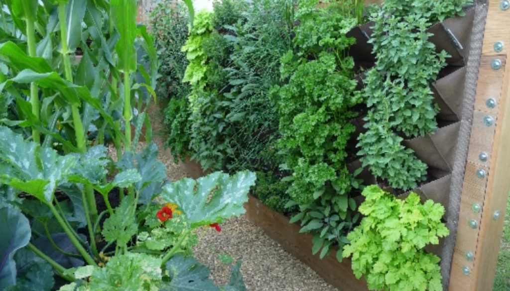 vertical gardens and plant screening Geographe landscapes blog post