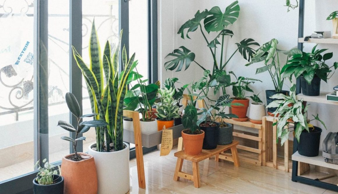 Indoor plants for your home or office   Geographe Landscapes Blog